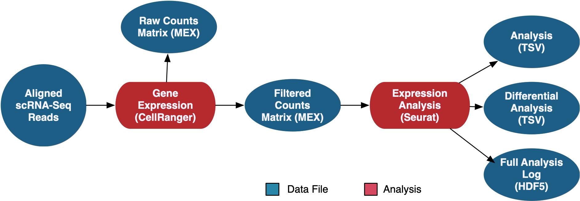 scRNA-Workflow